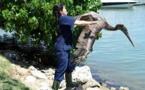 A Miami, au chevet des pélicans et des animaux exotiques