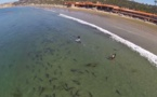 Requins, dauphins, baleines... les eaux californiennes affichent complet