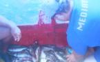 Moorea : des pêcheurs seront convoqués au tribunal pour pêche illicite