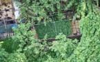 Douze mois de prison pour trafic de paka en provenance de Huahine