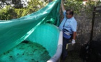 La perspective de cas autochtones de Zika inquiète les Etats-Unis