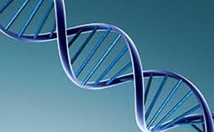 L'élevage et l'agriculture parient sur l'édition génétique