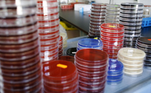 """L'OMS liste 12 """"superbactéries"""" contre lesquelles il faut développer de nouveaux antibiotiques"""