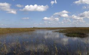 En Floride, le marécage des Everglades en péril