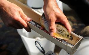La France souhaite le maintien de l'interdiction de la pêche électrique