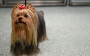 Macabre mise en scène de la mort d'un chien: une Autrichienne poursuivie
