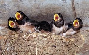A Languidic, le plus grand centre de soins pour animaux sauvages ne désemplit pas