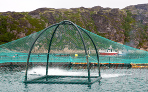 Les océans pourraient accueillir des millions de km2 d'aquaculture