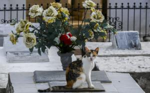 Pacte avec le diable? Quand des chats veillent sur une tombe en Colombie