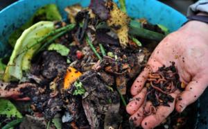 """Des """"lombricomposteurs"""" distribués aux Parisiens, pour faire du compost"""