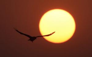 Climat: agir sur les rayons du soleil, une menace pour la vie sauvage