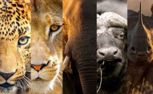 Internet, une menace pour les animaux sauvages (ONG)