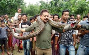 Inde: il pose avec un python et échappe de justesse à l'étranglement