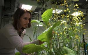 Une nature sous cloche pour mieux comprendre l'impact humain