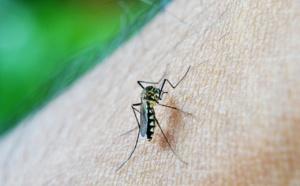 La lutte contre la paludisme au point mort, selon l'OMS