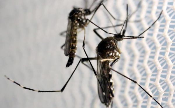 Une quarantaine de cas de transmission locale du virus Zika à Singapour (gouvernement)