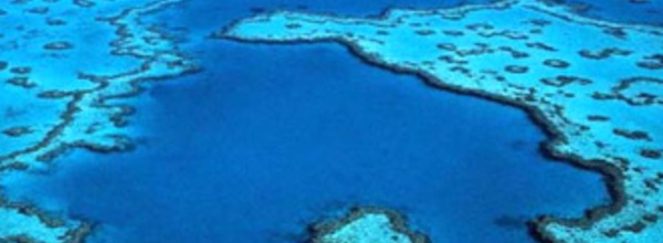 La Grande barrière menacée par la pollution, selon un rapport officiel australien