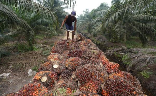 Indonésie: HSBC finance la destruction de forêt tropicale (Greenpeace)