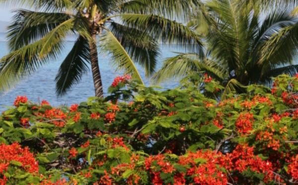 Floraisons de nos arbres tahitiens (1re partie)
