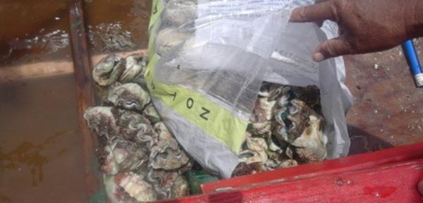 Moorea : des pêcheurs de bénitiers pris en flagrant délit