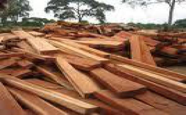 Le bois tropical, l'autre or vert du Pacifique