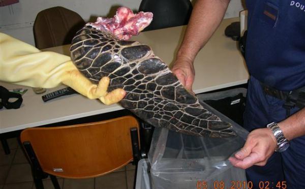 Saisie des douanes: Triste fin pour deux tortues marines protégées