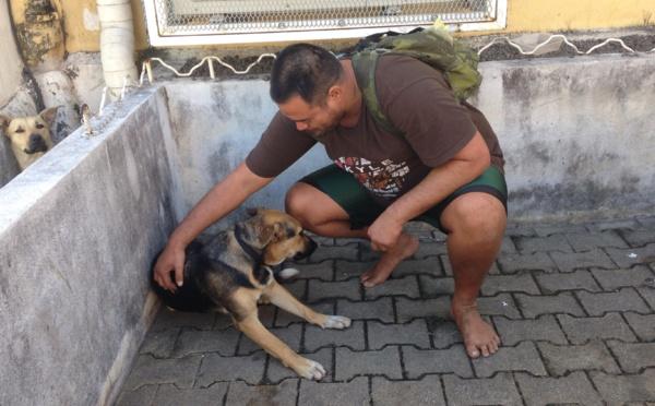 La mairie de Papeete jette les chiens de SDF à la fourrière