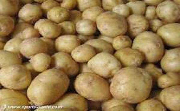 Soutien apporté aux producteurs de pomme de terre