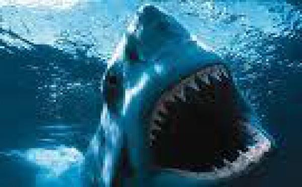 Nouvelle attaque de requin aux îles Tonga