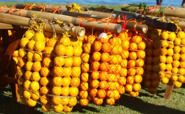 Carnet de voyage - Hommage aux cueilleurs d'oranges