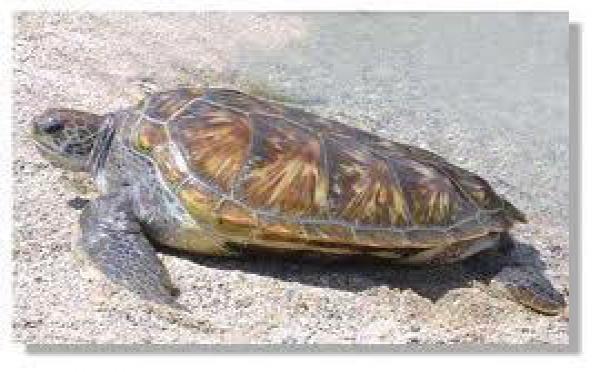 Communiqué du Ministre de la santé et de l'écologie relatif aux tortues marines