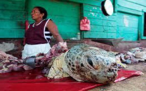 Micronésie: 6 personnes mortes après avoir consommé de la viande de tortue