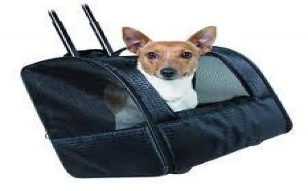 Une station de quarantaine pour les chiens importés en Polynésie française