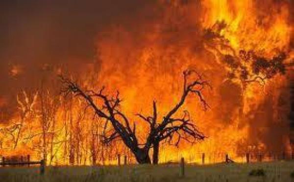 Australie: de nombreuses maisons détruites par des incendies autour de Perth