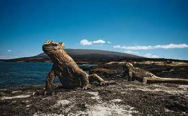 Equateur: trois sites naturels aux Galapagos endommagés par le tsunami