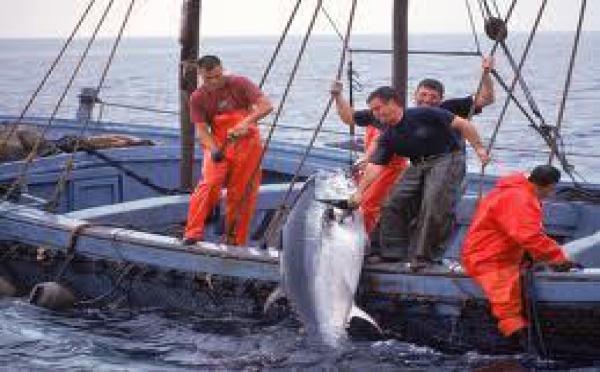 Pêche au thon dans le Pacifique : Fidji et la Papouasie-Nouvelle-Guinée en première ligne