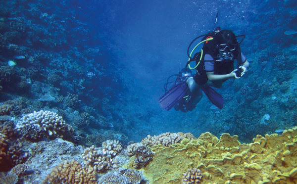 """Survivre au blanchissement rend la Grande barrière de corail """"plus résistante à la chaleur"""""""