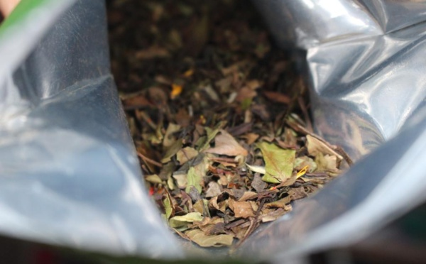 Page enfant : Le thé, toute une histoire