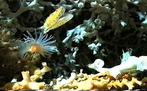 """Biodiversité: 1000 à 2000 espèces nouvelles découvertes grâce à la mission """"Santo 2006"""""""