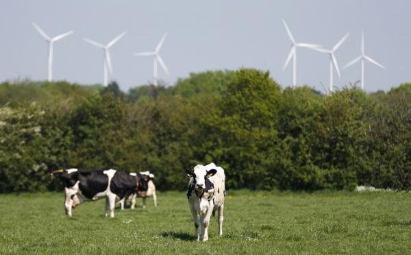 Mystère autour d'éoliennes accusées de tuer des vaches