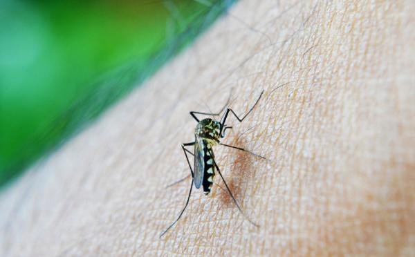 Algérie et Argentine certifiées exemptes de paludisme par l'OMS