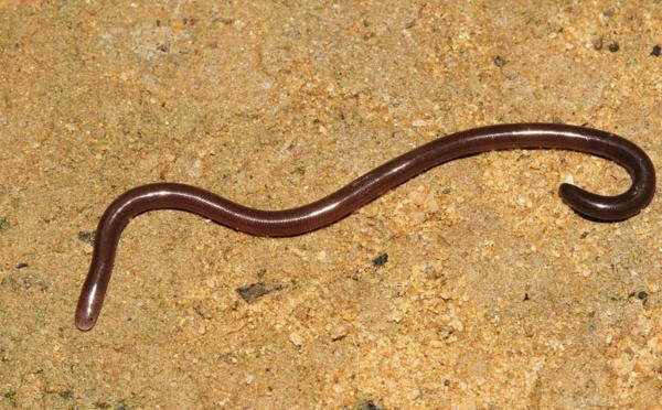Le serpent, un curieux animal qui vit aussi à Tahiti