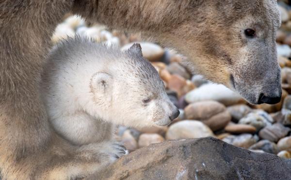 Page enfant : Tout savoir sur les ours
