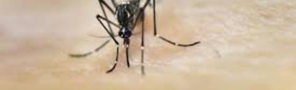 La chasse au moustique tigre réactivée en France