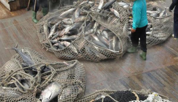 La Communauté du Pacifique lance une application mobile sur la pêche