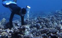 Des micros ont ainsi été placés autour de Moorea à 10 mètres de fond sur la pente externe sur huit sites : quatre au sein de l'aire maritime protégée (AMP) de Moorea et quatre dans des zones non protégées.