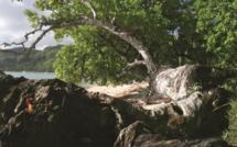 """Carnet de voyage - Huahine : Avea, la """"plage forêt"""""""