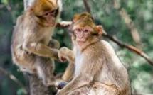 Landes: marche et recueillement pour 163 singes euthanasiés