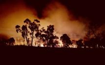 Un incendie de forêt fait rage à Sydney