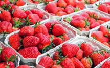Découverte de fraises australiennes piégées en Nouvelle-Zélande